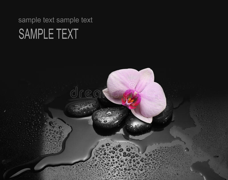 Download Stones And Orchid With Water Drops Stock Image - Image: 25039365