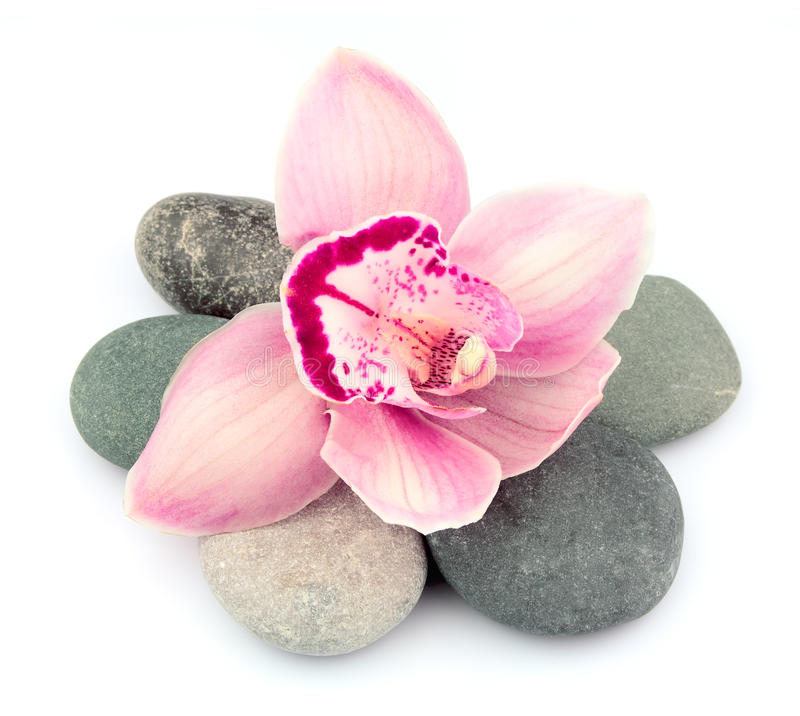 Download Stones And Pink Orchid Flowers Stock Photo - Image: 23840282
