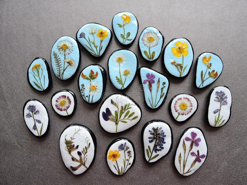 Stones with pressed flowers. Natural stones with pressed wild flowers on black leather vector illustration