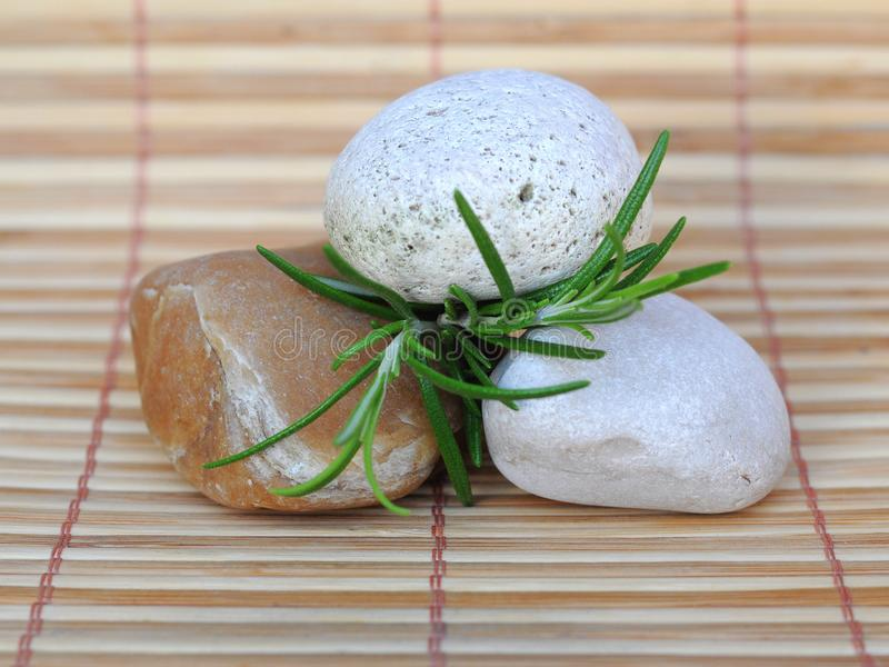Download Stones and rosemary stock photo. Image of flower, wellness - 20626906