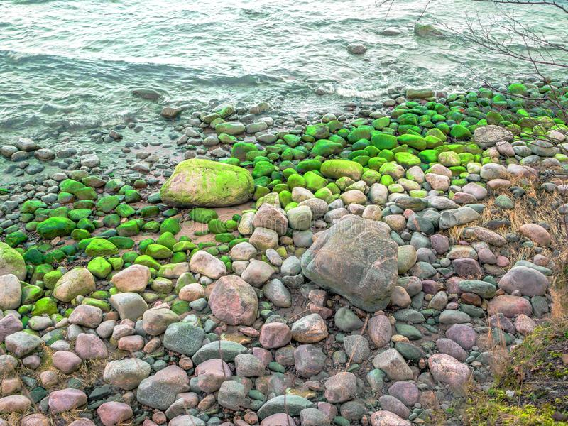 Stones with seaweed on the beach royalty free stock photo