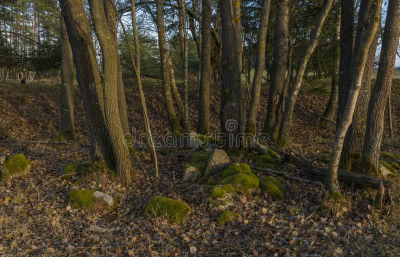 Stones with trees in leaf forest in south Bohemia in winter evening royalty free stock photography