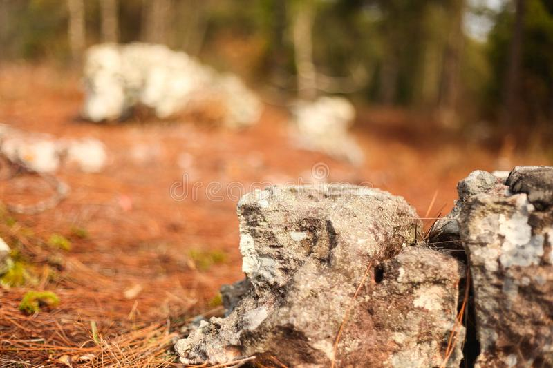 The stones in the woods, feel loneliness more. Which is something very few people will miss. But it is more useful to us royalty free stock photo