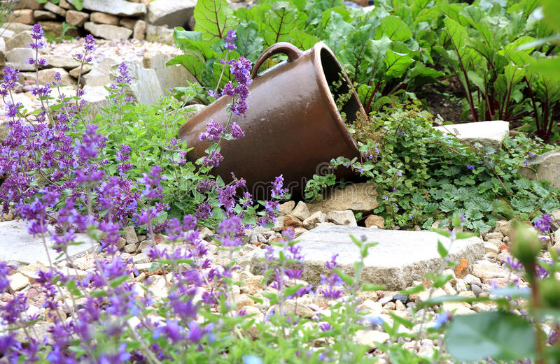 Stoneware with Glechoma hederacea and catnip on the gravel path. royalty free stock images