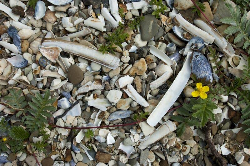 Stony beach royalty free stock photos