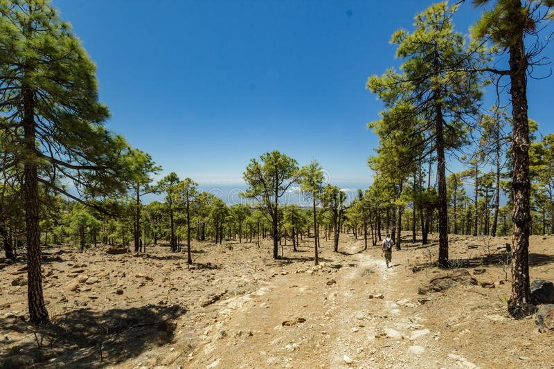 Stony path surrounded by pine trees at sunny day. Clear blue sky and some clouds along the horizon line. Rocky tracking road in. Dry mountain area with needle stock images