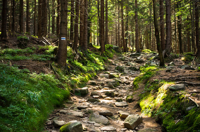 Stony path in the woods stock images