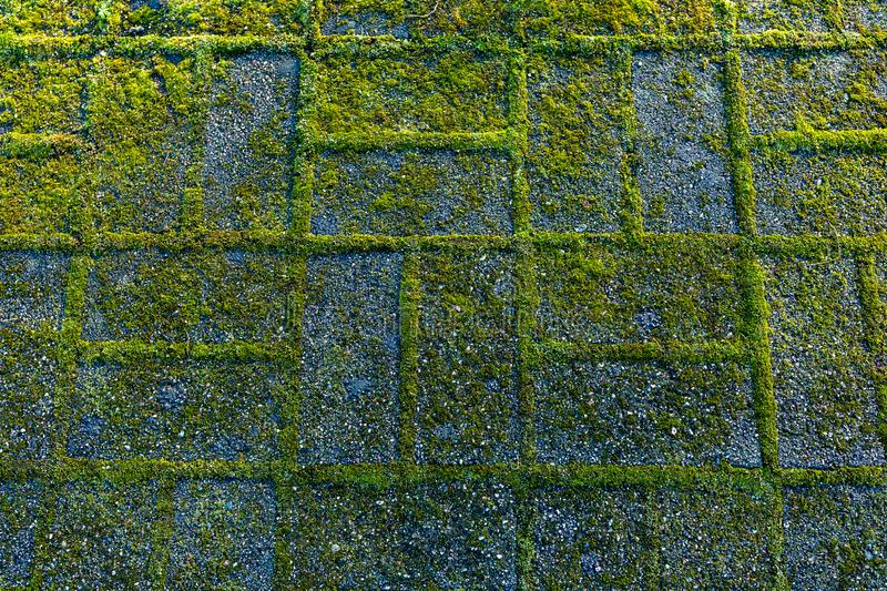 Stony rough textured background. Green moss on the stone footpath. royalty free stock image