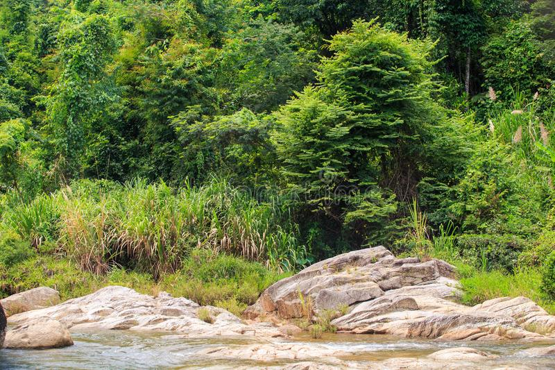 Stony Small River Bank against Tropical Forest. Stony shallow mountain river bank among tropical forest royalty free stock images