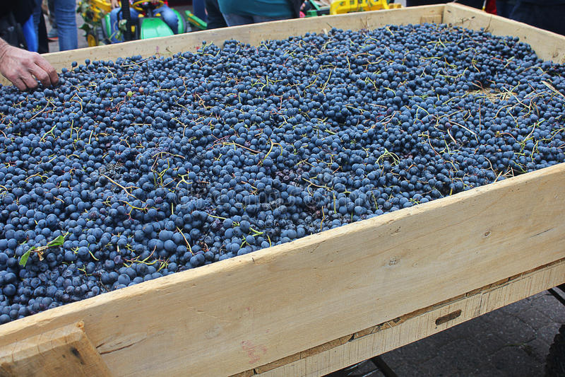 Stootkar met druiven stock fotografie