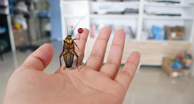 Stop bullying sign , Showing by cockroach. The cockroach standing on lady hand and showing Stop bullying sign stock image