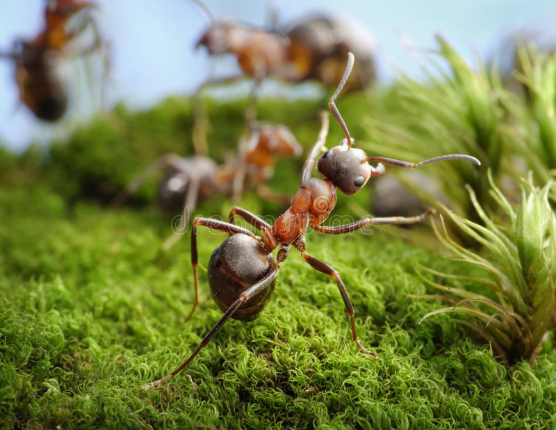 Stop! Deed of Hero, ant tales. Stop! Deed of The Hero, ant tales royalty free stock photos