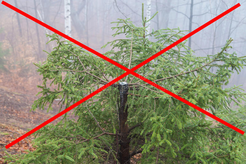 Stop deforestation! royalty free stock photography