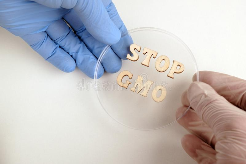 STOP GMO from wooden letters. One hand in a white medical and the other in a blue lab glove together hold a petri dish. Concept of. STOP GMO from wooden letters royalty free stock images