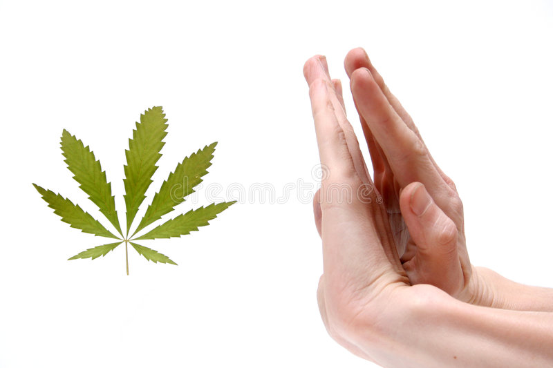Download Stop narcotic ! stock photo. Image of leaf, cannabis, ganja - 572846