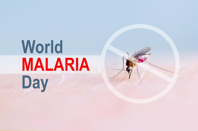Stop, prohibit sign on mosquito bite human skin, Human blood in insect stomach. WORLD MALARIA DAY. Stop, prohibit sign on mosquito bite human skin, Human blood royalty free stock image