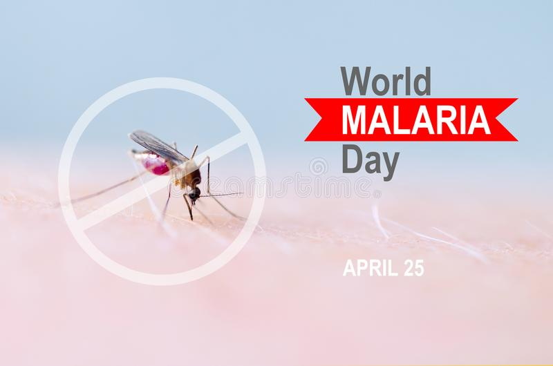 Stop, prohibit sign on mosquito bite human skin, Human blood in insect stomach. WORLD MALARIA DAY. Stop, prohibit sign on mosquito bite human skin, Human blood stock photography