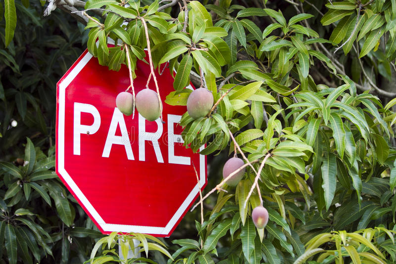 Stop sign. Brazilian stop sign in portugues or spanish royalty free stock image