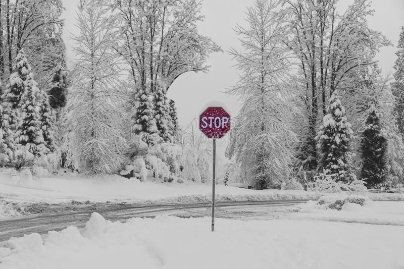 Stop Sign set in a Snowy day country road background. Black and white rural snow scene with bright red stop sign as if the sign gives command to nature to STOP royalty free stock photo