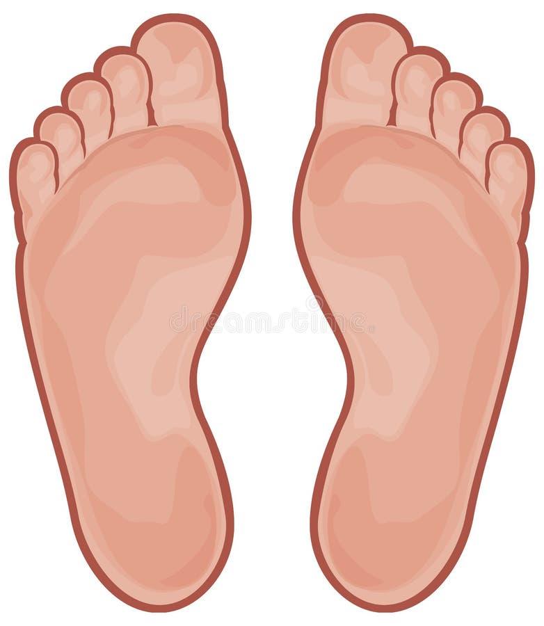 stopa ilustracji