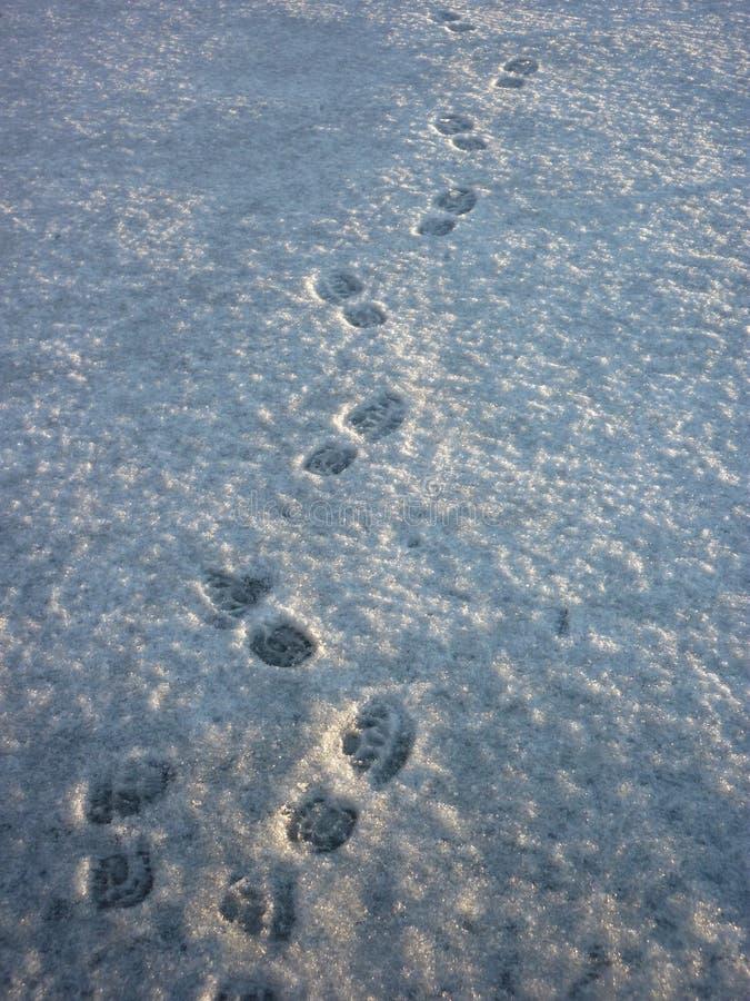 stopa jest śnieg fotografia royalty free