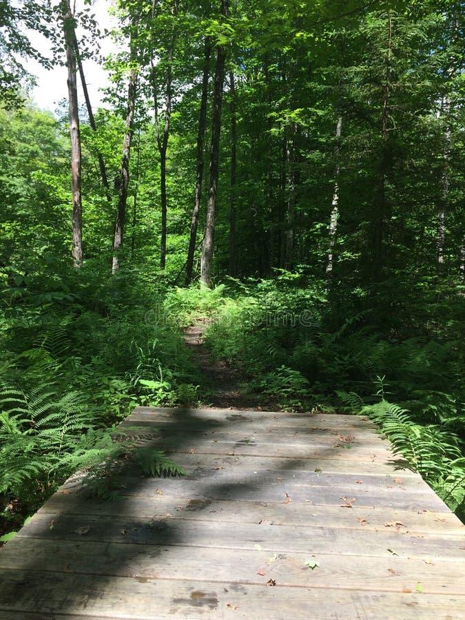 Stopa most Piękny Vermont ślad w lecie obraz royalty free
