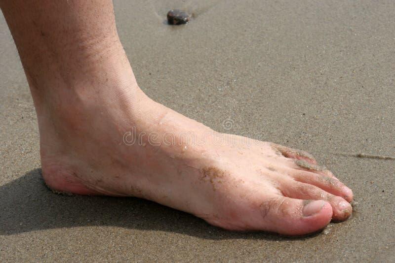 stopa piaskowata obrazy stock