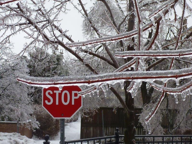 STOPP hal väg Is täckte filialer och plats royaltyfri bild