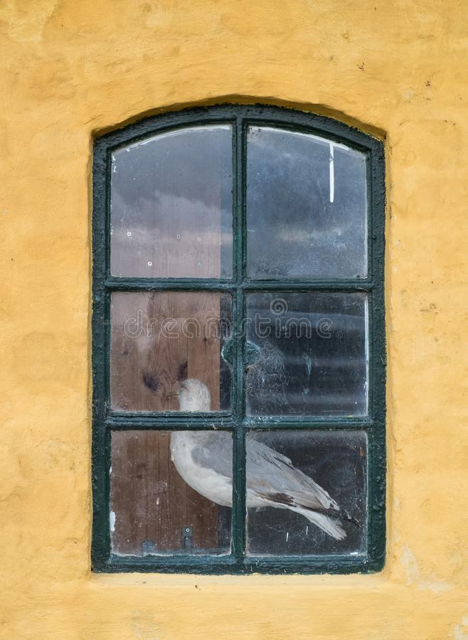 Stopped gull behind a window stock photo