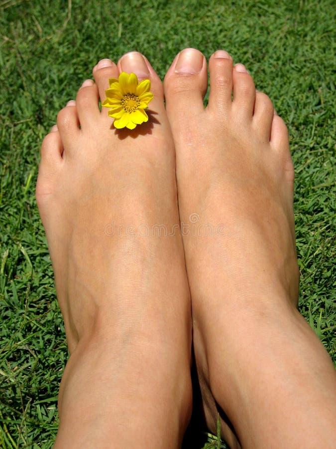 stopy kwiatów fotografia stock