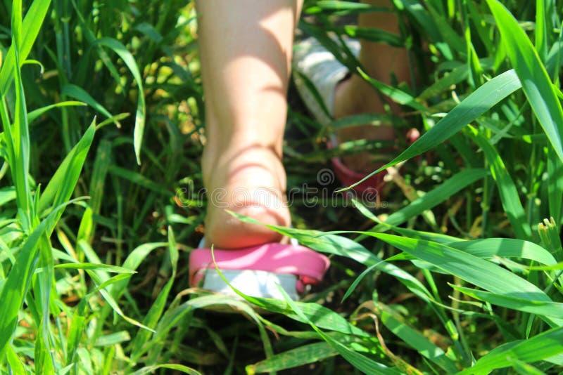 stopy trawy zdjęcie stock