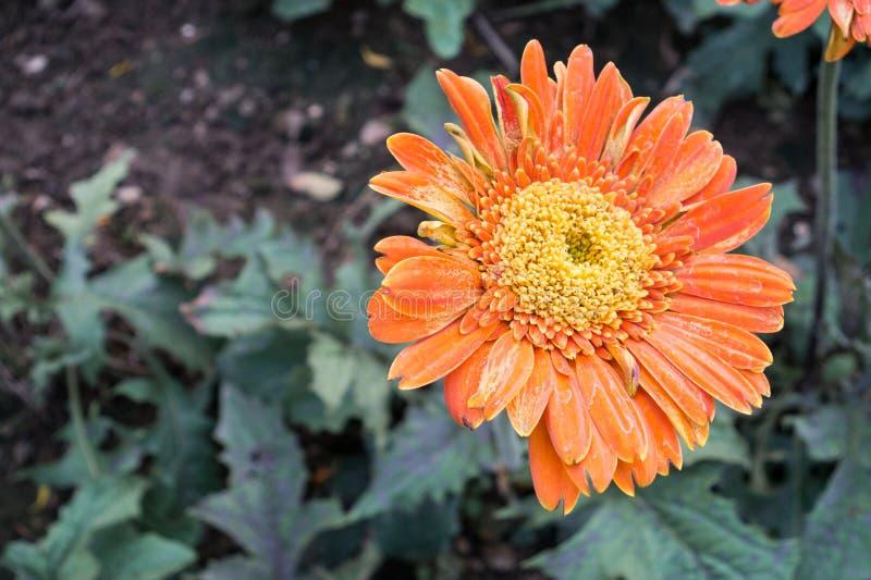 Stor blomma royaltyfri bild