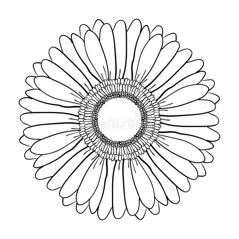 Stor blommande Gerberablomma Hand dragen illustrationvektor Skissar den realistiska svartvita hand-drog bilden för vektorn av Ger royaltyfri illustrationer