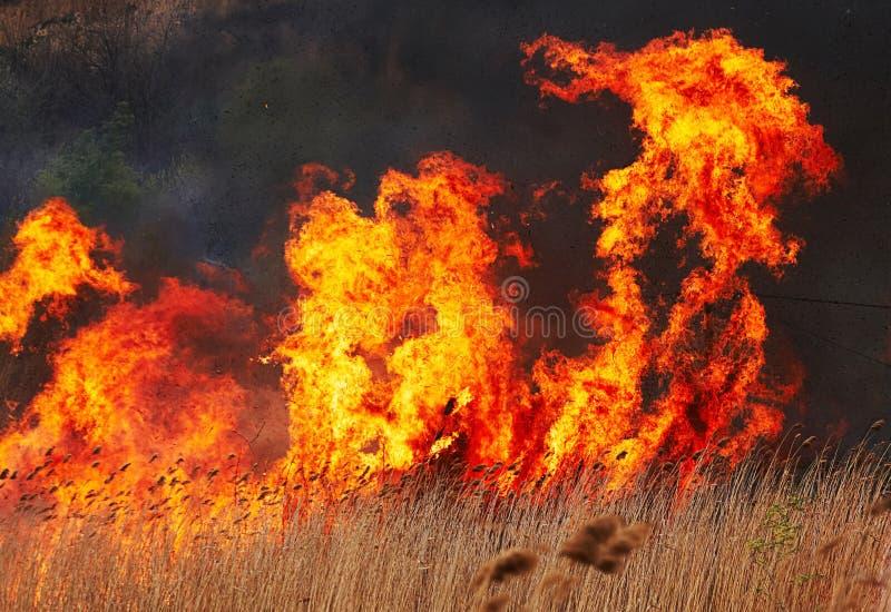 stor brand fotografering för bildbyråer