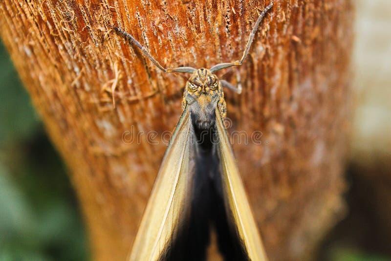 Stor brun fjäril på trädstammen, foto från över arkivfoton