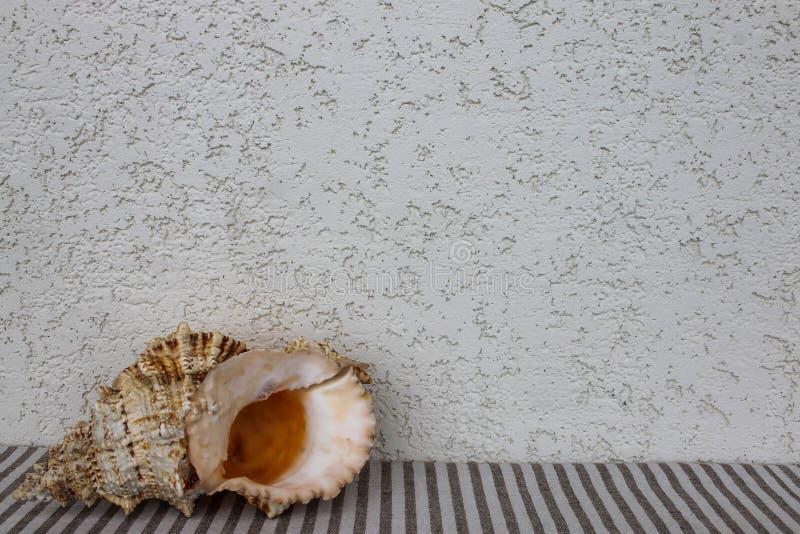Stor cockleshell på den randiga textilen arkivfoton