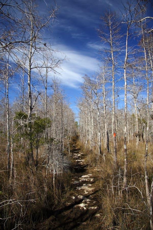 stor cypressflorida trail royaltyfri foto