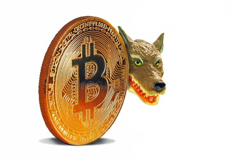 Stor dålig varg för Bitcoin cryptocurrency som morrar handel för digital för valuta för tandpengar online-för valutamarknad inter royaltyfria foton