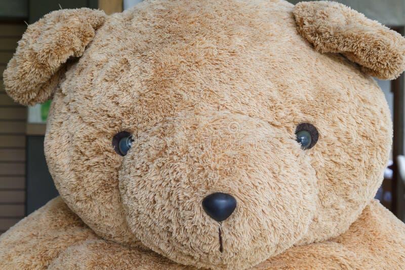 Stor dockabrunbjörn för närbild arkivfoton