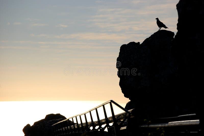 Stor fågel på en klippa i tabellbergmedeltal i Sydafrika royaltyfria foton