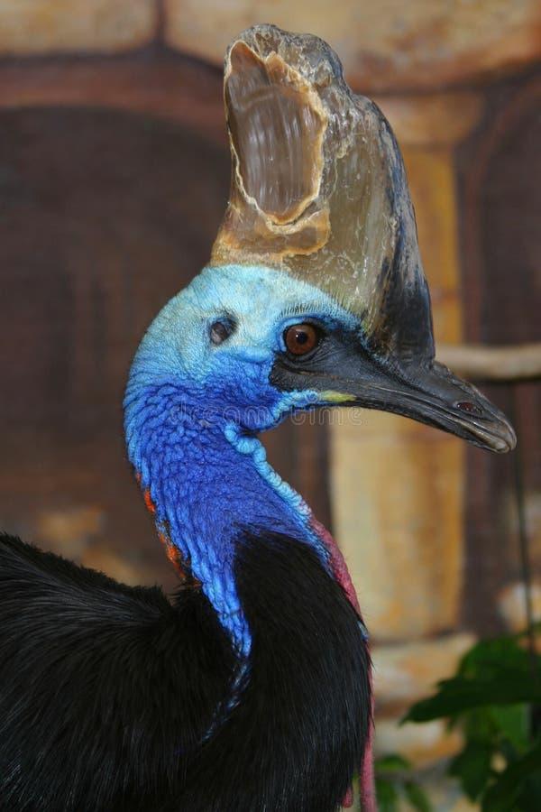 stor fågelprofil royaltyfria foton