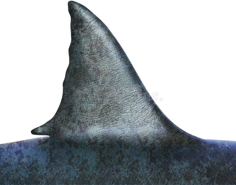 Stor fena för vit haj som isoleras royaltyfri fotografi