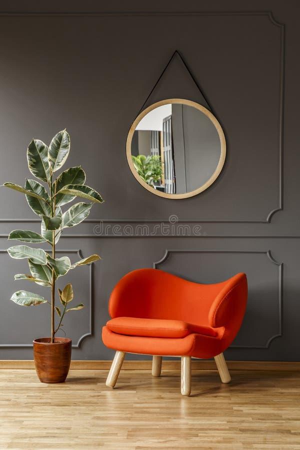 Stor fikusväxt, en vibrerande orange fåtölj och en rund spegel i en grå vardagsruminre med stället för en golvlampa Verklig pho royaltyfri bild