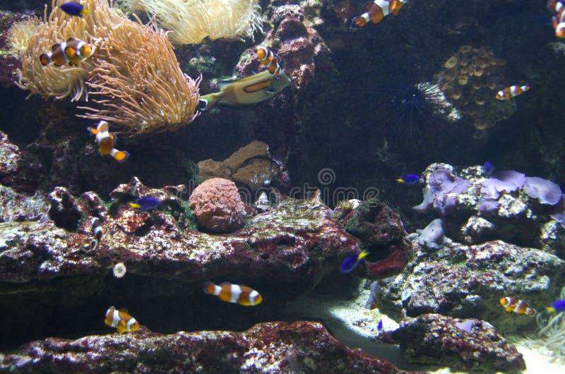 Stor fiskbehållare i det Vancouver akvariet royaltyfri foto