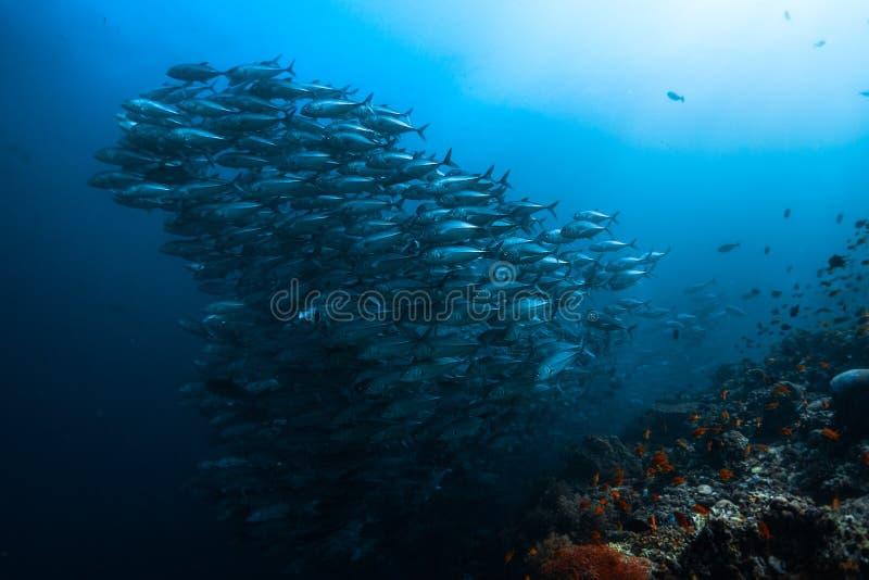 stor fiskskola royaltyfria foton