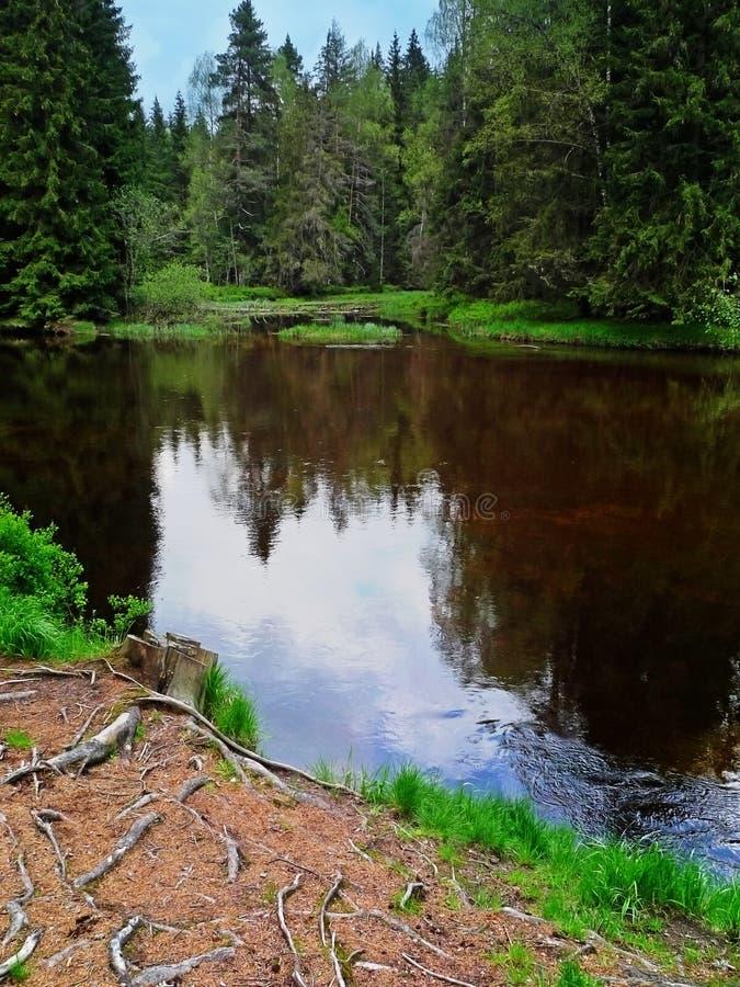 stor flod för myrnaturreservation fotografering för bildbyråer