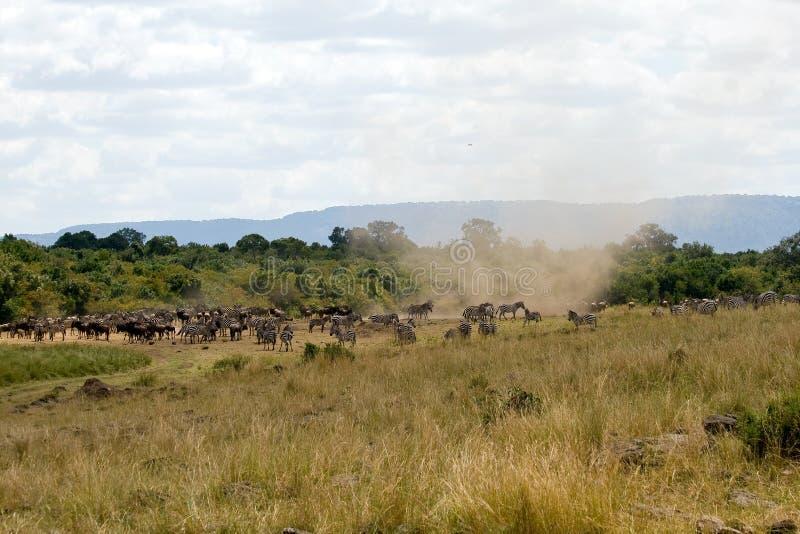 Stor flyttning med cyklon i masaien Mara National Park arkivfoto