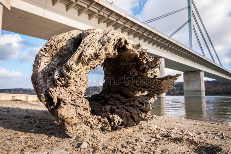 Stor gammal rutten trädstubbe med hålet som drivved på shorelinen för sandig strand nära vatten som kommas med av tidvatten i Nov arkivfoto
