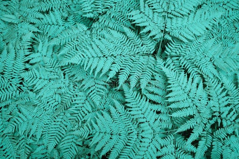 Stor grön buskeormbunke i skogbakgrunden från neonsidorna av växter arkivbild