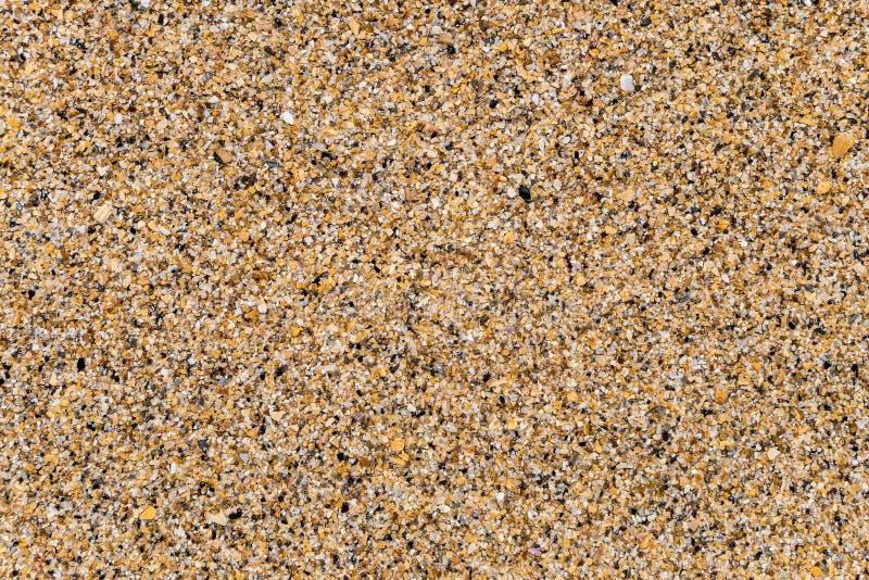 Stor grov våt havssand som består av fragment och skräphavsskal royaltyfri bild